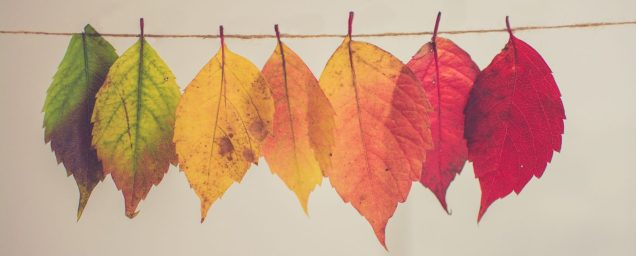 Autumn Leaves. Photo by Chris Lawton on Unsplash