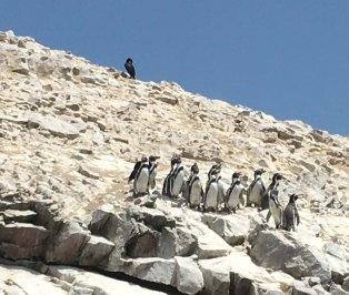 BI-penguins