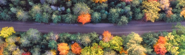 Fall colors seen from above
