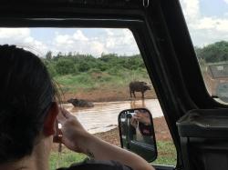 Close to buffaloes