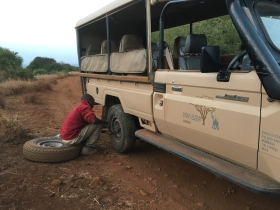 Safari guide changing a tire