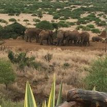 Elephants dominate