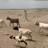 Boy goat herder