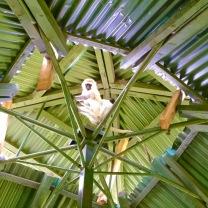 Mara Intrepids tower monkey