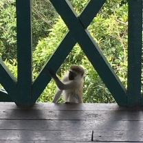 Monkey sneaking into the tower