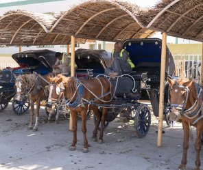 Horse and buggy rides